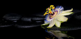härlig brunnsortinställning av passiflorablomman på zenstenar Royaltyfri Foto