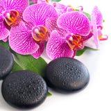 Härlig brunnsortstilleben av den blommande filialen rev av orkidén Royaltyfri Fotografi