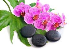 Härlig brunnsortstilleben av den blommande filialen rev av orkidén Royaltyfri Foto