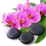 Härlig brunnsortstilleben av den blommande filialen rev av violett orch Arkivfoton