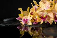 Härlig brunnsortstilleben av zenstenar med droppar och blommat Arkivbild
