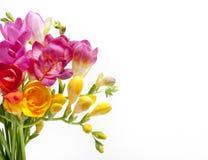 Härlig bukett av färgrik freesia royaltyfri fotografi