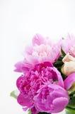 Härlig bukett av rosa och vita pioner Arkivfoto