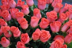 Härlig bukett av rosor Fotografering för Bildbyråer