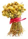 Härlig bukett av torkade sidor och blommor av portte på filial royaltyfria bilder