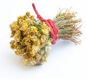 Härlig bukett av torkade sidor och blommor av portte på filial Det används i avkok royaltyfria foton