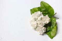 Härlig bukett av vita jasminblommor Arkivfoto