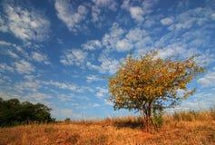 härlig buske c Fotografering för Bildbyråer