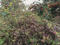 Härlig buske med det rosa röda bäret och för rainforestlövverk för olika variationer tropiska växter på skogbakgrund royaltyfri bild