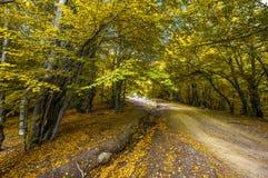 Härlig bygdbergväg i höstskog royaltyfri bild