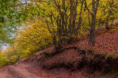 Härlig bygdbergväg i höstskog arkivbilder