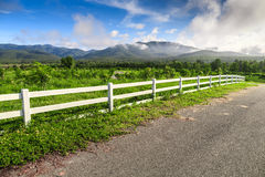 Härlig bygdväg i grönt fält under blå himmel Arkivfoton