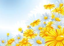 härlig chamomile för bakgrund stock illustrationer