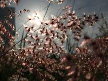 Härlig cirkel av den ljusa reflexionen Arkivfoto
