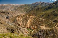 Härlig Colca kanjontrek nära den Arequipa staden, Peru Arkivfoton
