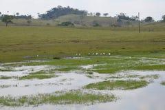 HÄRLIG COLOMBIANSK NATURLIG LIVSMILJÖ, ESTERO LLANERO arkivbild