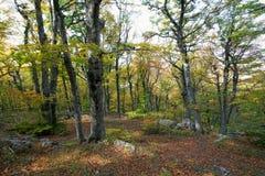 härlig crimean skog för höst Arkivfoto