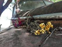 Härlig död blomma royaltyfri fotografi