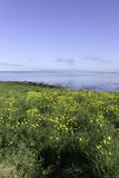 Härlig dag vid fjorden Arkivfoton