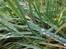 Härlig dagg på ett gräs royaltyfria foton