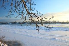 härlig dagvinter Snö på banken av floden Royaltyfri Foto