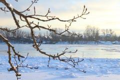 härlig dagvinter Snö på banken av floden Arkivfoto