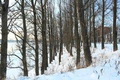 härlig dagvinter Snö på banken av floden Arkivfoton
