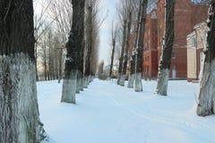härlig dagvinter Snow på vägen Snögränd snowtrees under Arkivfoto