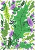 Härlig dekorativ gräns av blommatisteln Royaltyfria Foton