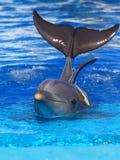 härlig delfin Arkivbild