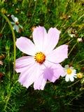 Härlig delikat blomma Arkivbilder