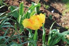 Härlig delikat blomma Arkivfoton