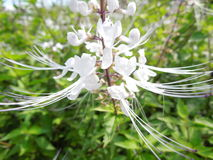 Härlig delikat vit blomma Royaltyfria Bilder