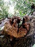 Härlig detalj av trädoliv arkivfoto
