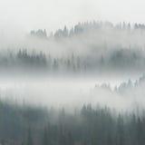 Härlig dimma i skog arkivfoton