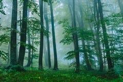 Härlig dimmig skogplats i den kroatiska Plitvicen Royaltyfria Foton