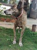 Härlig djur hund royaltyfri foto