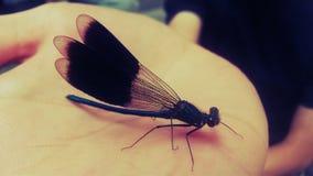 Härlig drakefluga Royaltyfri Foto