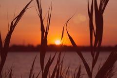 Härlig dramatisk solnedgångsoluppgång via havet och gräs Royaltyfria Foton