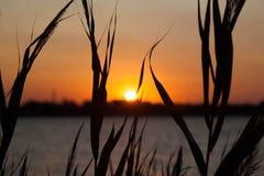 Härlig dramatisk solnedgångsoluppgång via havet och gräs Royaltyfri Bild