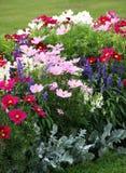 Härlig dunge av blomningettåriga växter royaltyfri fotografi