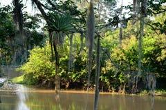 Härlig eftermiddag på parkera Pau D'garlic i Guararema - São Paulo - Brasilien Arkivbild