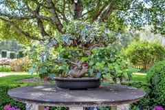 Härlig engelskaträdgårdstil som lägger in tabellen fotografering för bildbyråer