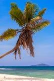 Härlig ensam palmträd Royaltyfria Bilder