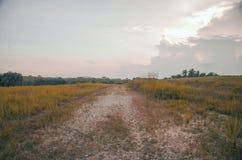 Härlig fältsikt med solnedgång och det svarta molnet fotografering för bildbyråer
