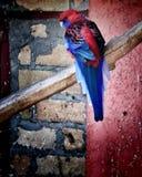 Härlig färg av fågeln arkivfoton