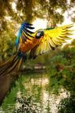 Härlig färgglad papegoja arkivbild
