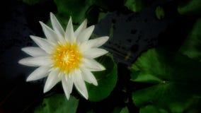 Härlig färgrik blomma Arkivbild