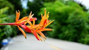 Härlig färgrik blomma Arkivbilder