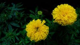 Härlig färgrik blomma Fotografering för Bildbyråer